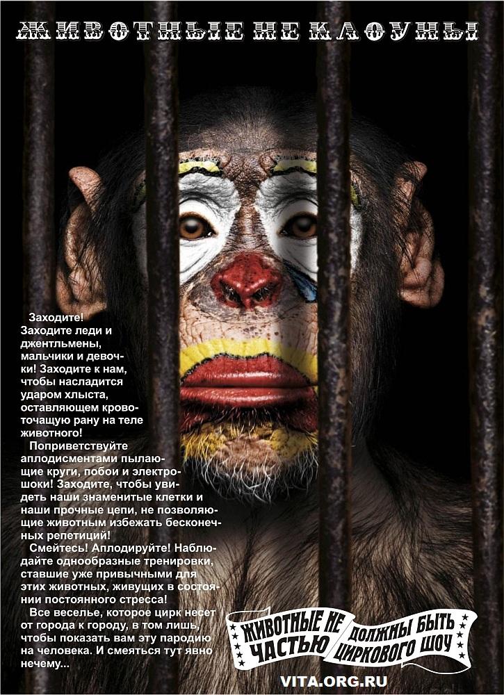 Цирк - ад животных