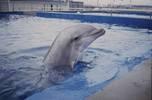 Дельфины в неволе