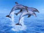 Акция «Нет жестоким развлечениям!» у передвижного «Московского дельфинария» в Чебоксарах