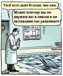Дельфинарий: муки                и уничтожение дельфинов