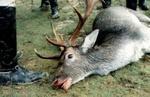 Охота - серийное убийство