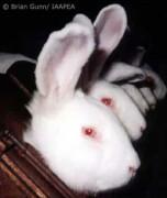Тестирование на животных косметики и бытовой химии