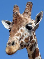 <b>Награда за вклад в гуманное образование 2008»</b>                - начался приём заявок на грант для вузов, решивших заменить опыты                на животных гуманными альтернативами