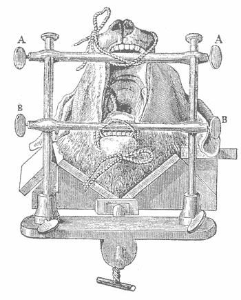 Опыт Клода Бернара, в котором у собаки челюсти                широко открыты в продолжение нескольких дней