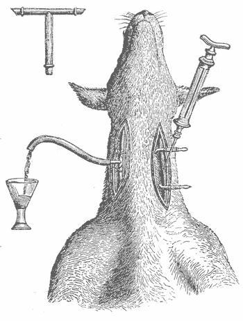 На этом рисунке изображен вивисекционный процесс,                который определяет время прохождения яда через кровеносную систему