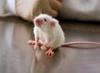 Более                      115 миллионов животных гибнет в опытах ежегодно во всем мире