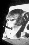Тестирование на животных в табачной промышленности