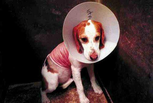 vivisection animal experimentation