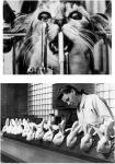Эксперименты на животных