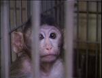ЭКСТРЕННО! Требуем принять Закон о запрете тестирования косметики на животных в России