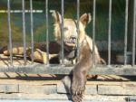 Брижит Бардо обратилась к Президенту Медведеву и Премьеру Путину с призывом принять Закон о защите животных от жестокости