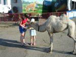 «Московский сафари-зоопарк» в Волгограде