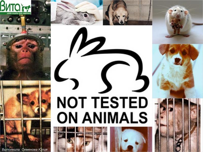 Как сделать тест на животных 559