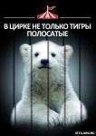 Цирк: концлагерь для животных