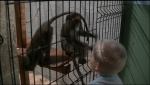 """Зоозащитные организации Санкт-Петербурга требуют                остановить деятельность """"контактных"""" зоопарков"""