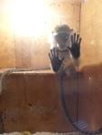 """Жители Вологды и """"ВИТА"""" просят закрыть                """"контактный"""" зоопарк-выставку в одном из торговых центров                города"""