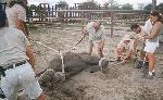 Цирк: животные для развлечений