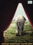 >Победа! Индия запрещает использование диких животных в цирках!