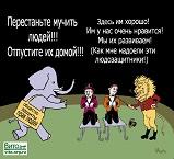 Цирк - ад животных - 75.jpg