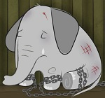 Тольяттинцы, не посещайте цирки с животными!