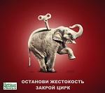 >Животных начали исключать из цирковых шоу