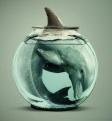 Закрыть в России переездные дельфинарии!