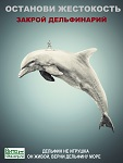 12 июля впервые в Калининграде: акция в защиту морских животных «Нет жестоким развлечениям – нет дельфинарию»