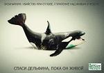 Океанариум SeaWorld: новые инциденты жестокого обращения с животными