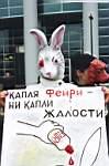 Капля «Фейри» - ни капли жалости. Международный день протеста против жестоких опытов на животных