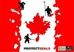Детеныши тюленя в Канаде