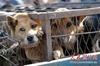 В Китае в погоне за мехом с кошек и собак заживо снимают                шкуру