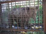 Пермские зоозащитники подали в суд на охотников