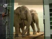 Сегодня, 20 июня, Международный день в защиту слонов