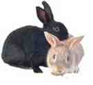 Любители крольчатины обвиняются в убийстве кота