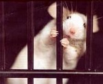 On April 24, International Day for Laboratory Animals,                another Russian University Rejects Animal Experiments