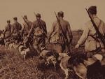 Животные на войне