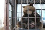 Финны за русских животных