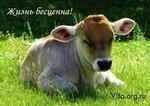 Новый год без убийства животных