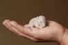 Продлён срок подачи заявок на грант для замены опытов на животных гуманными альтернативами