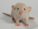 Международный                      день протеста против использования животных в экспериментах