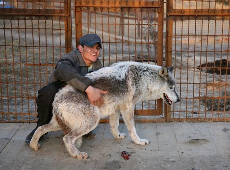 Приют для собак бим