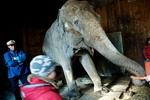 Цирк - не место для слонов. Плата за цирковую карьеру: голод в заточении