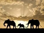 Индия освобождает слонов из цирка и зоопарка