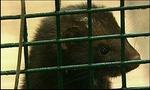 Меховщики хотят запретить фильм о страдании животных