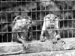 Мех невозможен без жестокого убийства животных