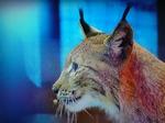 Брянская прокуратура встала на защиту животных