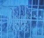 """Награждение победителей конкурса """"Наука без жестокости"""" в РАН"""