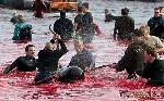 Останови кровавую бойню дельфинов - поддержи «Морского пастуха»