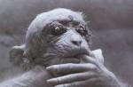 Остановите опыты на приматах