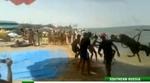Российские зоозащитники требуют наказать пляжных живодеров